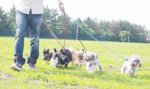 ペットシッター、キャットシッター、犬の散歩代行で開業する為の流れ