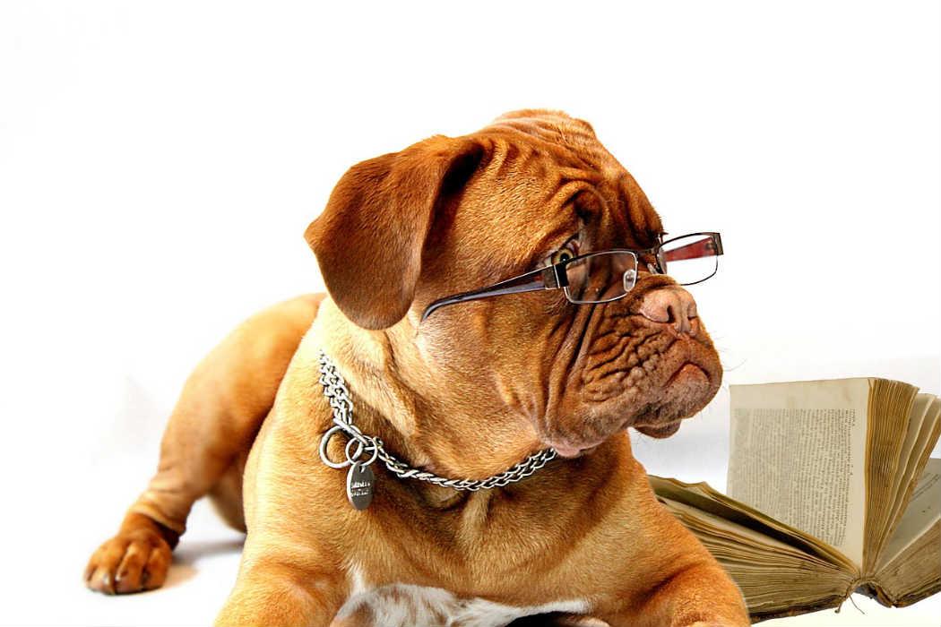 ペットシッターになるために取るならどの資格?開業に必要な資格と取得方法