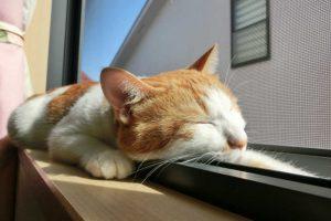 ペットシッターの開業に必要な動物取扱業の登録と手続き方法とは?