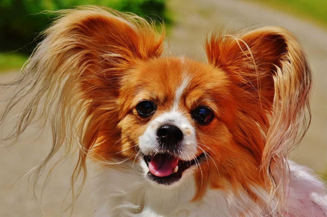愛玩動物飼養管理士2級の資格取得の流れと試験の難易度や費用について