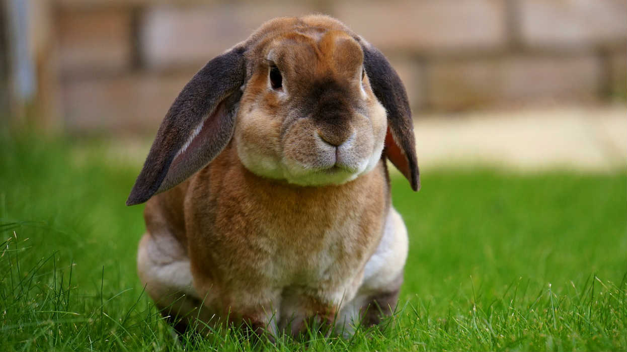 愛玩動物飼養管理士の資格取得の流れと費用