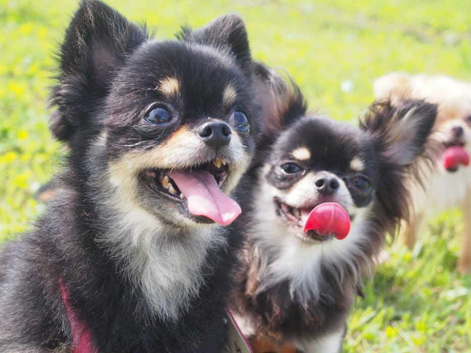 愛犬飼育管理士での動物取扱業登録