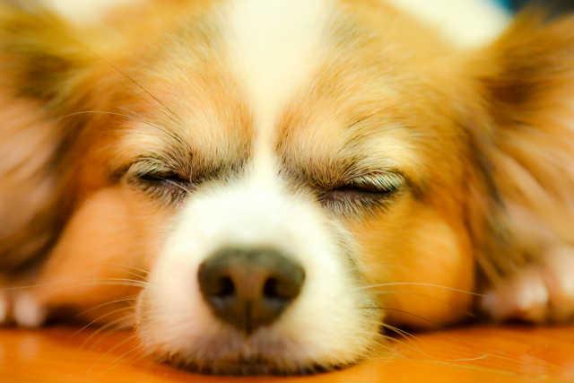動物取扱業の登録ができない資格