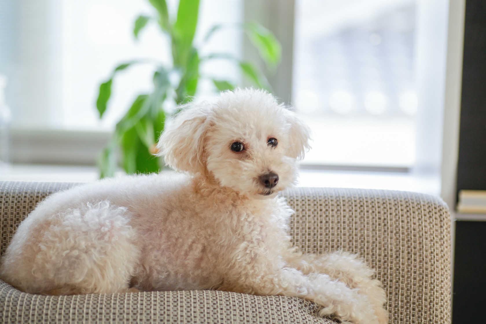 ペットシッターとして動物取扱業申請と動物取扱責任者申請が必要